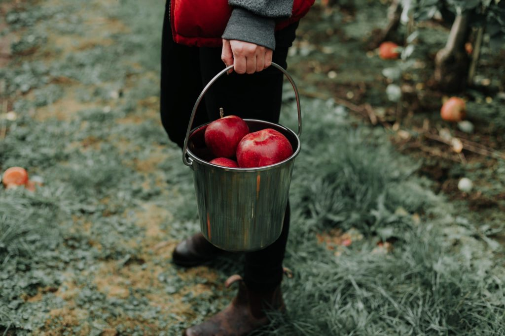 gather data like apple picking