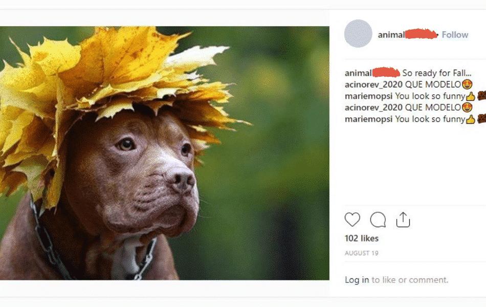 animals of instagram